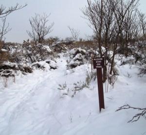 Winter Chamna